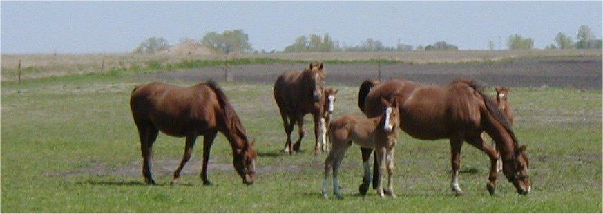 Wind Swept Acres Broodmares June 2003
